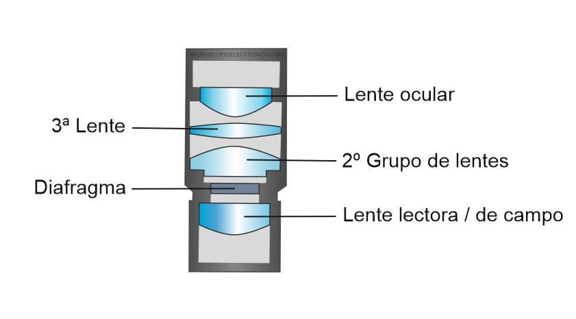 Partes del ocular del microscopio
