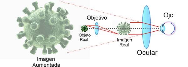 funcionamiento-del-microscopio